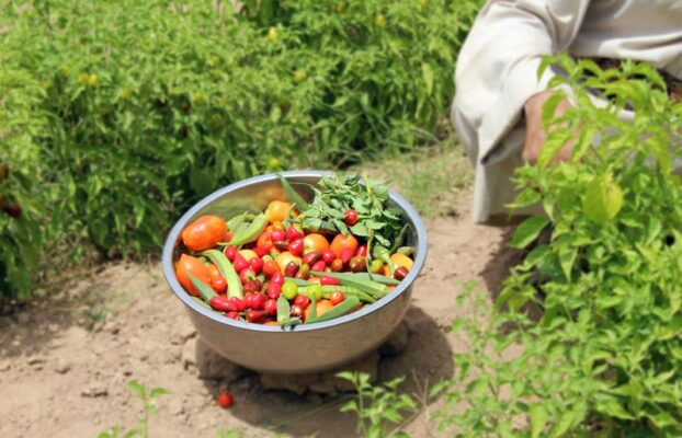 Livelihood and Agriculture Project Success Stories